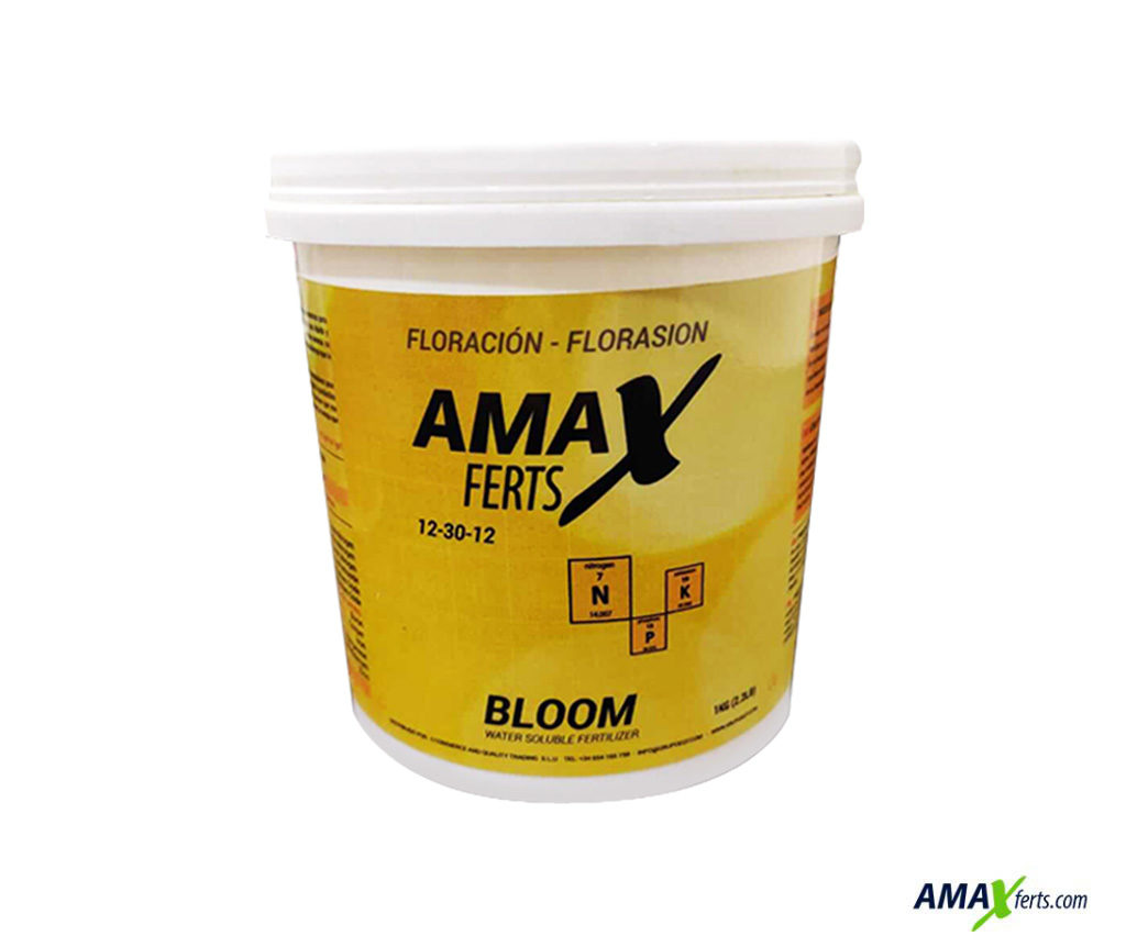 Amax Bloom